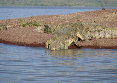 Lake Chamo croc